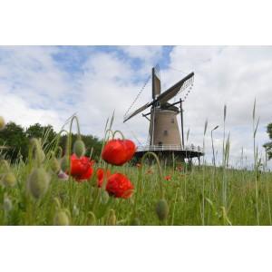 Nationale Molendag Soest 13 mei.