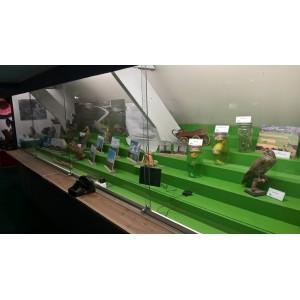 Nieuwe permanente expositie over de Natuur van Soest in museum Soest